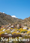 At Anza-Borrego Desert State Park, blooming wildflowers transform the desert landscape in late winter and early spring.Credit...Beth Coller for The New York Times